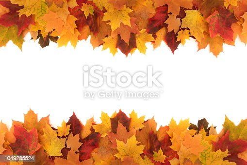 Colorful frame made of of fallen maple autumn leaves on white background.