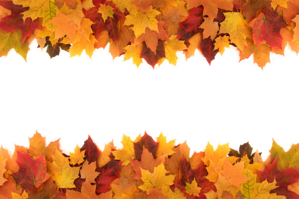 colorful frame made of of fallen maple autumn leaves on white background - autumn foto e immagini stock
