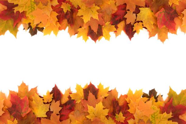 beyaz arka plan üzerinde renkli çerçeve düşmüş akçaağaç sonbaharında yapılmış bırakır - fall stok fotoğraflar ve resimler