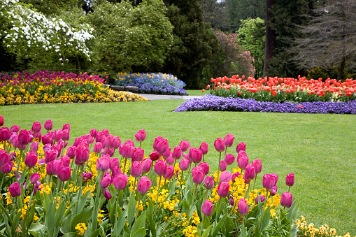 Colorful flowers blooming in the garden.