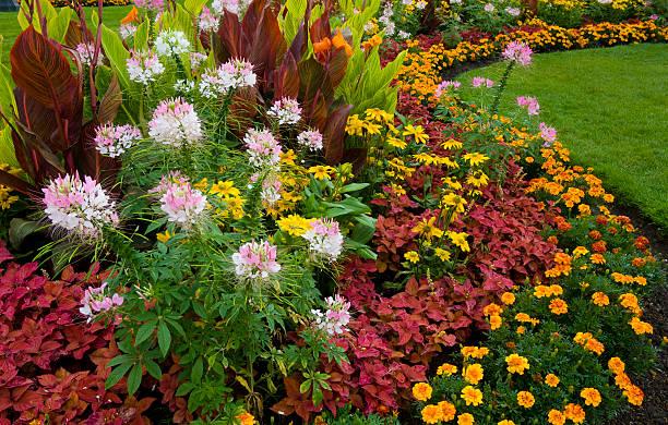 Colorful Garden stock photo