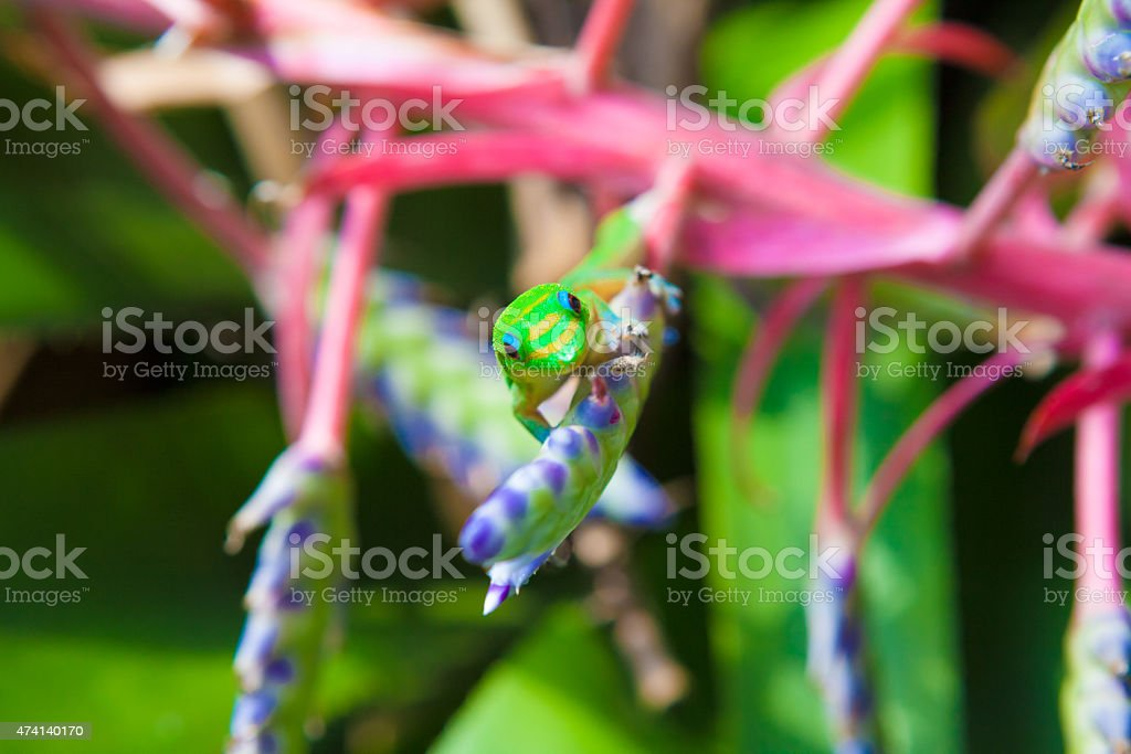 Colorful gecko stock photo