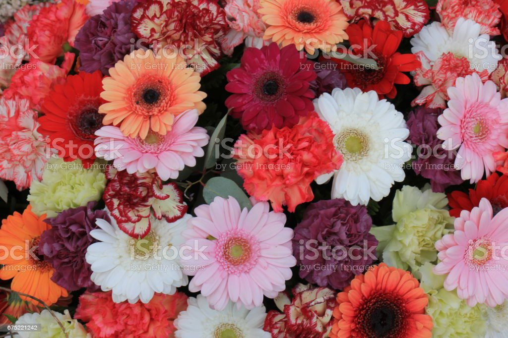 Colorful gerber bouquet royalty-free stock photo