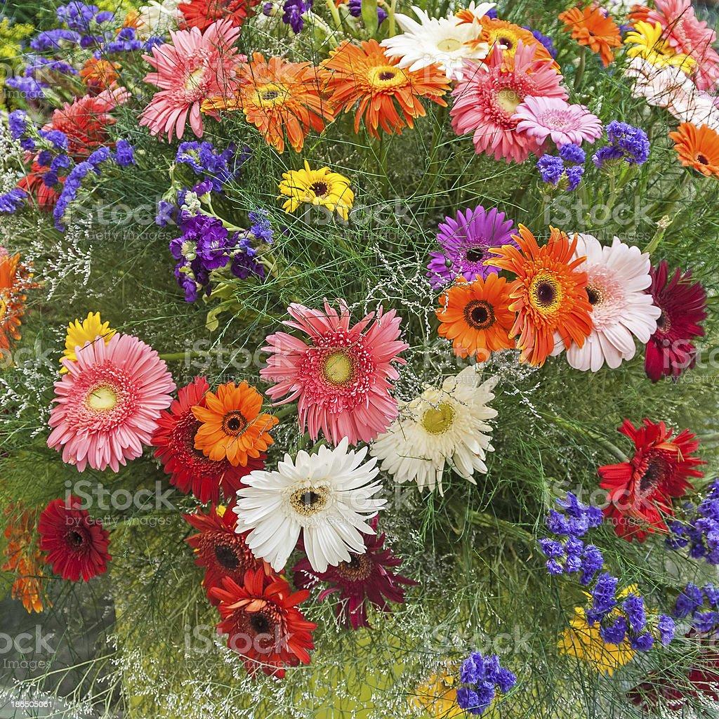 Colorful gerberas royalty-free stock photo