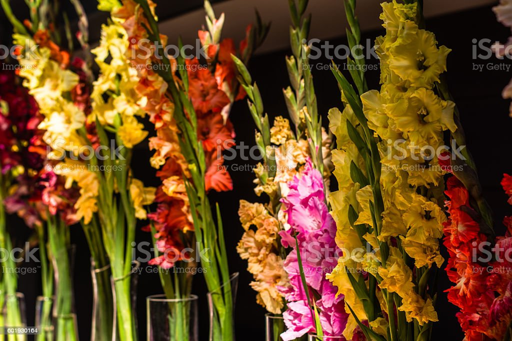 Colorful gladioli immersed in to the vases stock photo