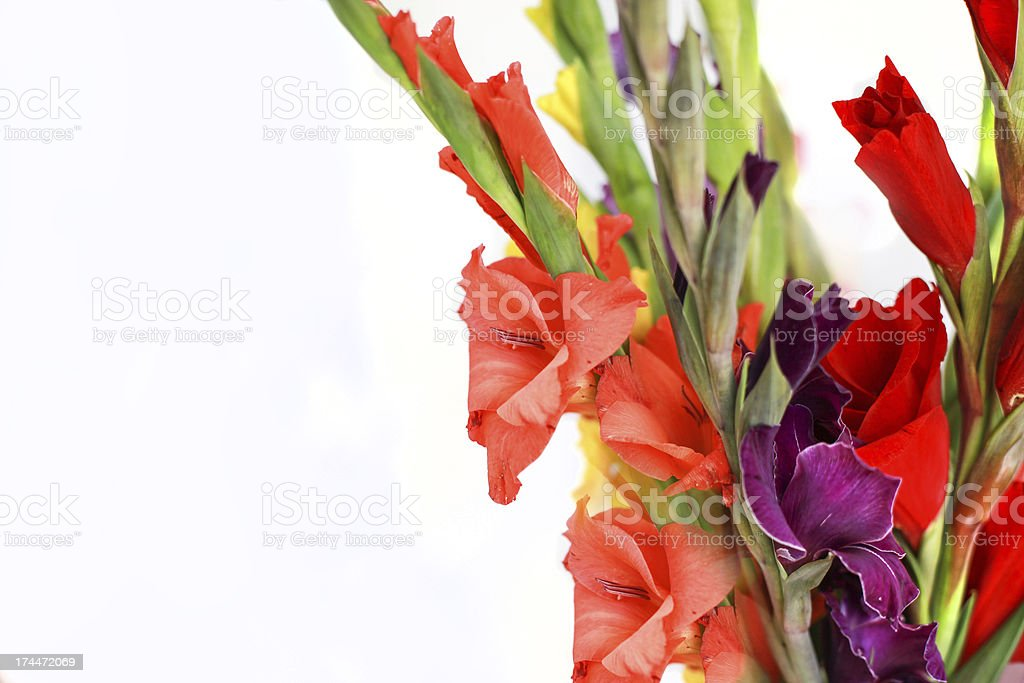 Colorful gladiolus bucket royalty-free stock photo