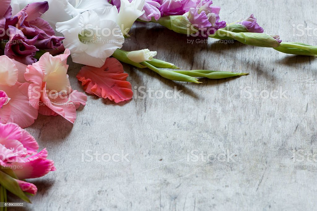 colorful gladiolus stock photo