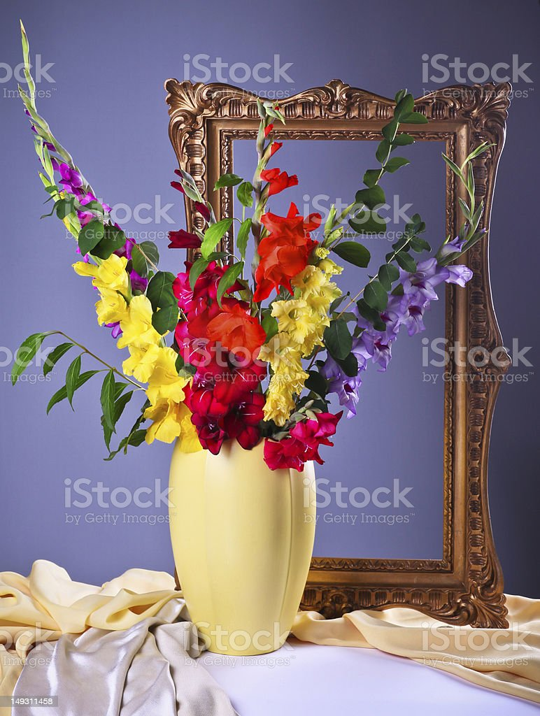 Colorful  gladioluses royalty-free stock photo