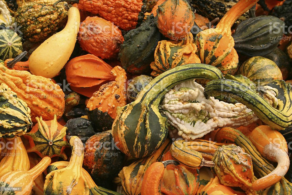 Colorful gourds royalty-free stock photo