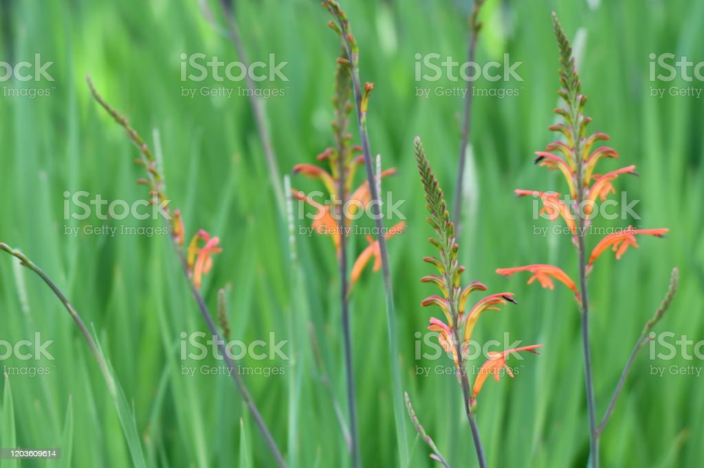 Colorful Grass with Soft Green Background Natural Scene Backgrounds Stock Photo