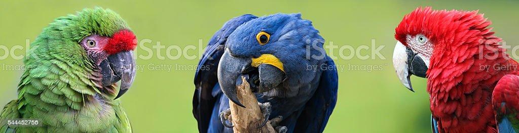 Colorful group of Macaws - foto de acervo