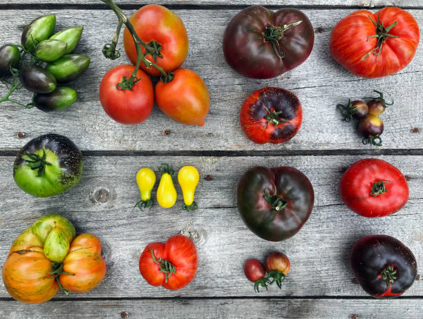 colorful heirloom tomatoes fresh from my organic country garden - imperfection stock photos and pictures