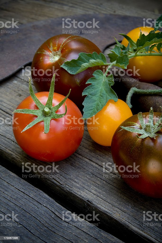 Colorful heirloom tomatoes with garden tool stock photo