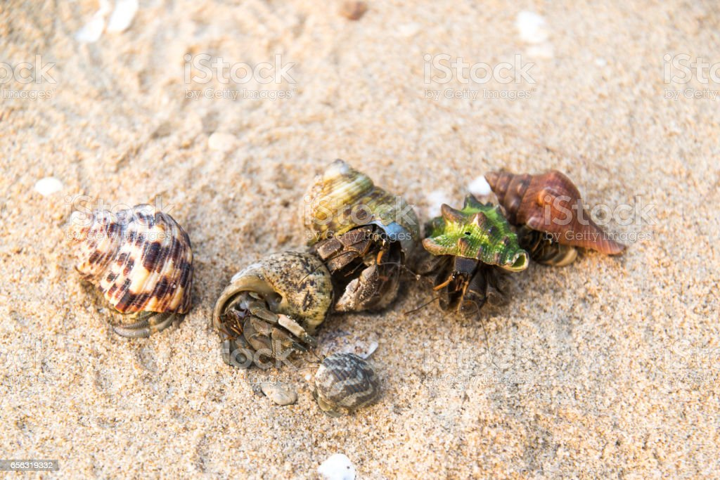 Colorful hermit crab on the beach in Thailand stock photo