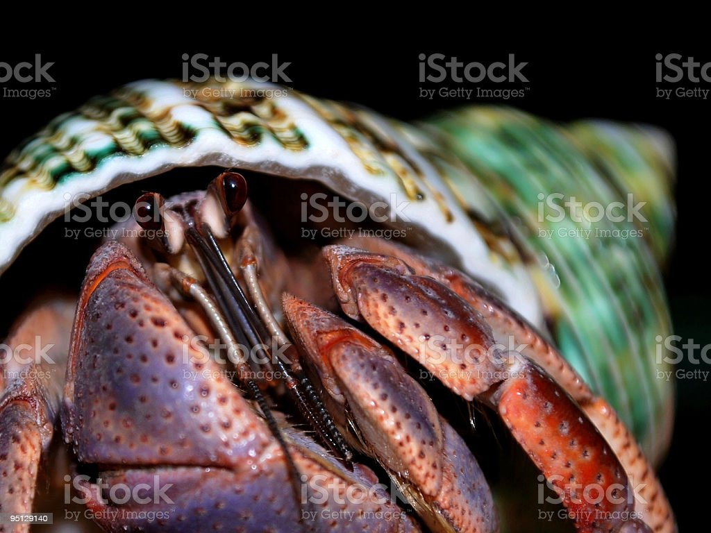 Colorful Hermit Crab Up Close Macro Eyes Focus Stock Photo & More ...
