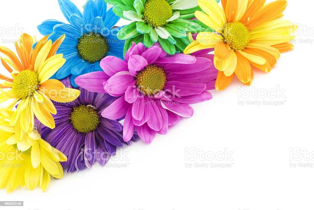 Colorful High Key Daisies royalty-free stock photo
