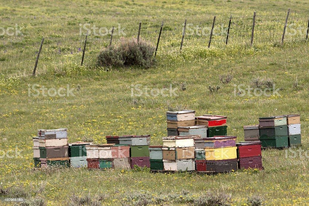 Colorful honey bee hives Colorado royalty-free stock photo