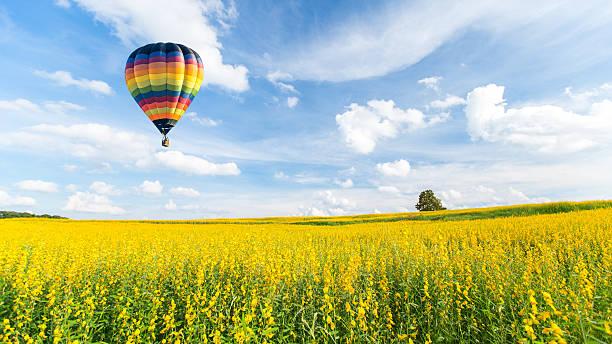 воздушный шар над желтый цветок полей против голубого неба. - hot air balloon стоковые фото и изображения