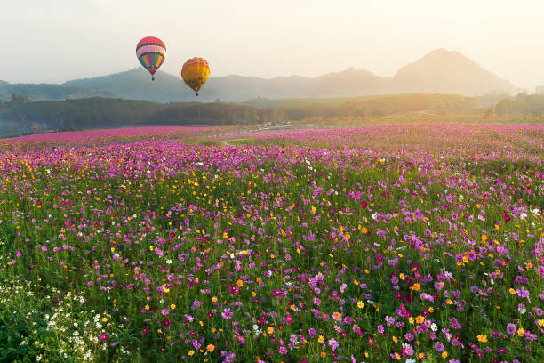 Colorful hot air balloons in the early morning stock photo