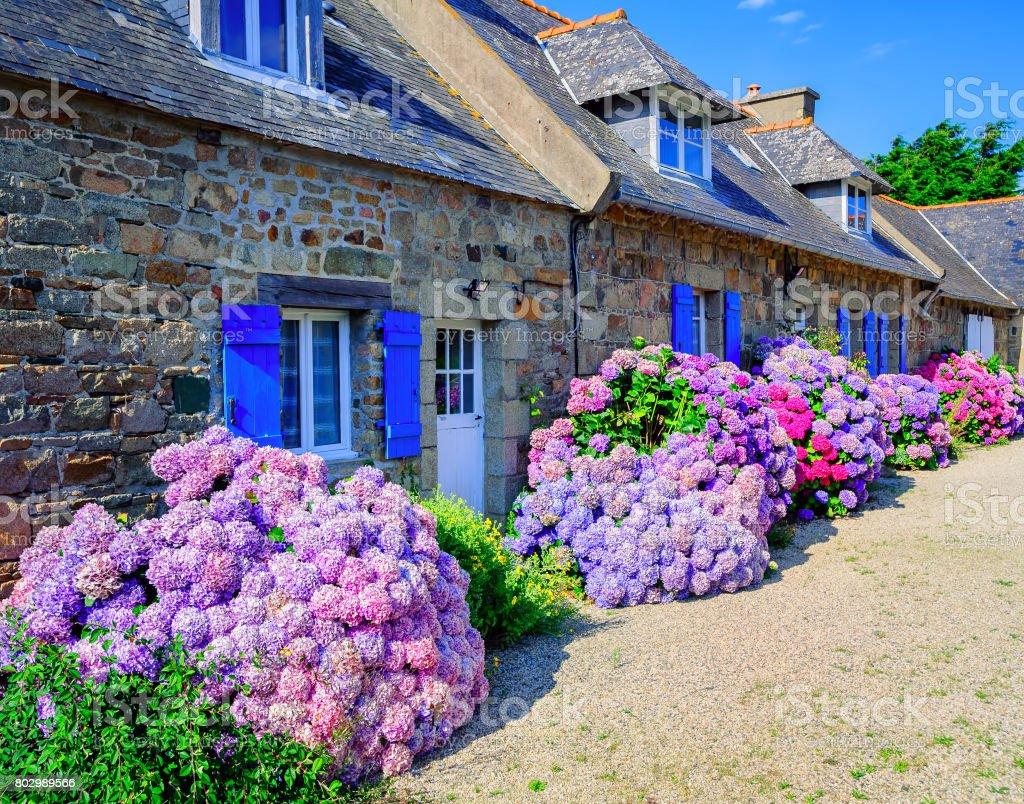 Bunte Hortensien Blumen in einem kleinen Dorf, Bretagne, Frankreich – Foto