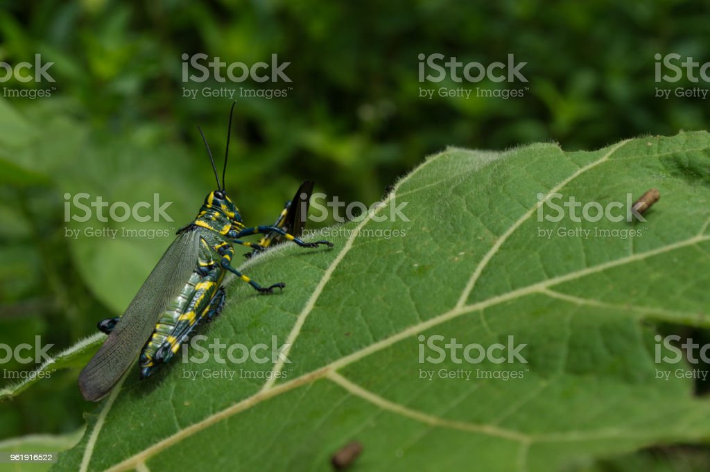 colorful insect stock photo