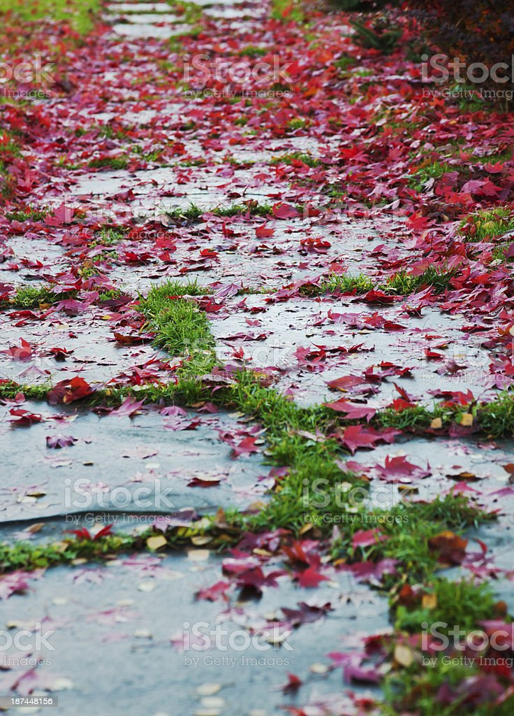 Colorful Japanese maple leaves on the ground. royalty-free stock photo