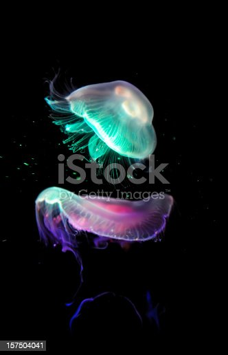 glowing jellyfishes on black background.