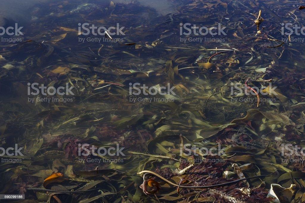 Colorful Kelp royaltyfri bildbanksbilder