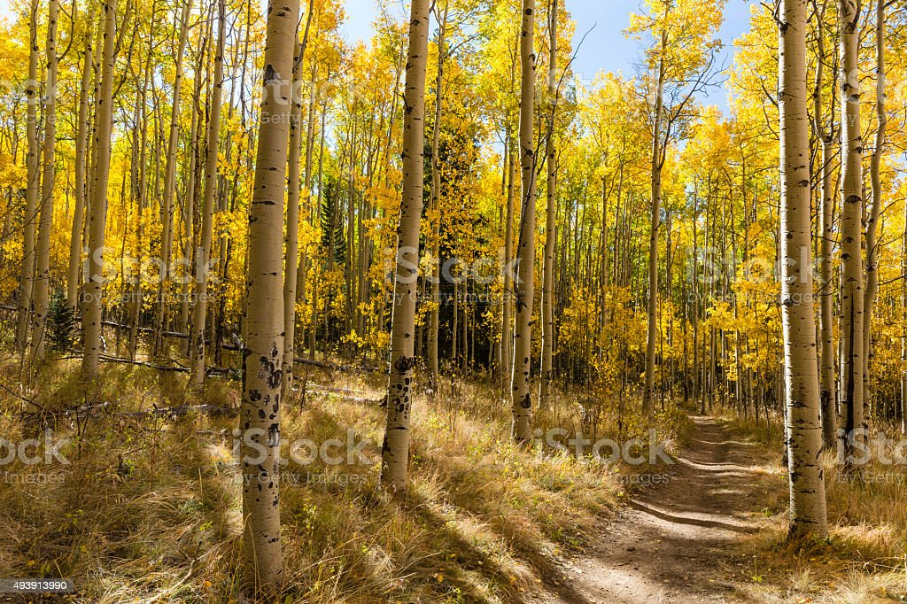 Colorful Kenosha Pass Trail stock photo