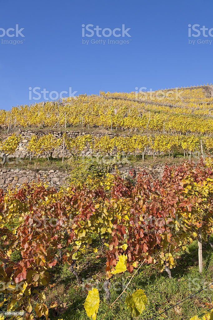 Colorful last October Day stock photo