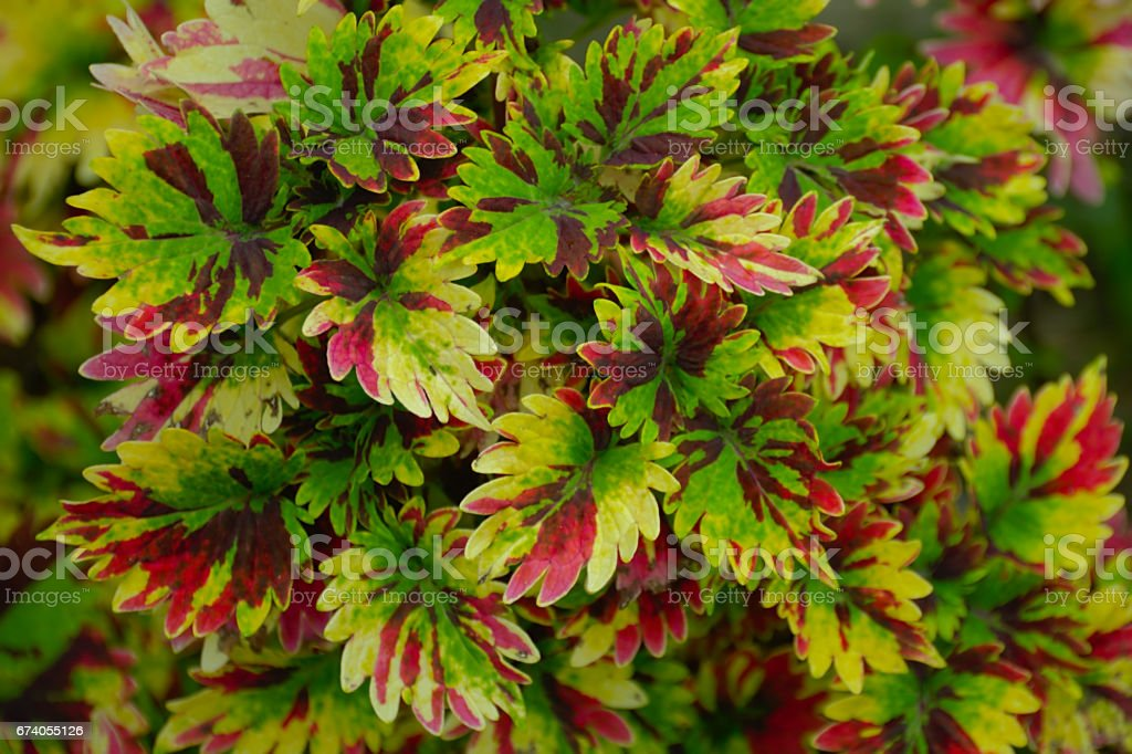 Colorful leaf royalty-free stock photo