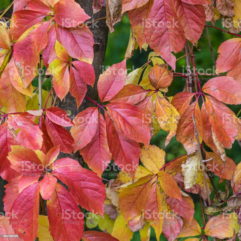 colorful leaves at the ground royalty-free stock photo