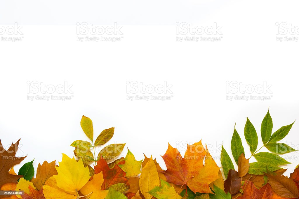 colorful leaves bottom royalty-free stock photo