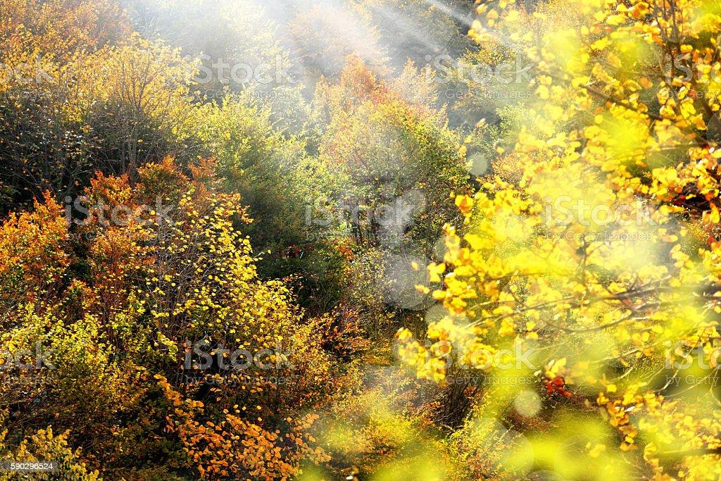 Красочные листья в Осенний Стоковые фото Стоковая фотография