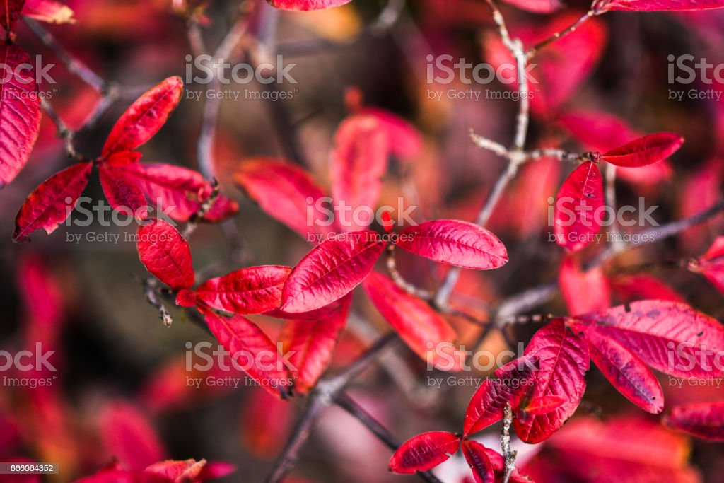 Colorful leaves in garden stock photo
