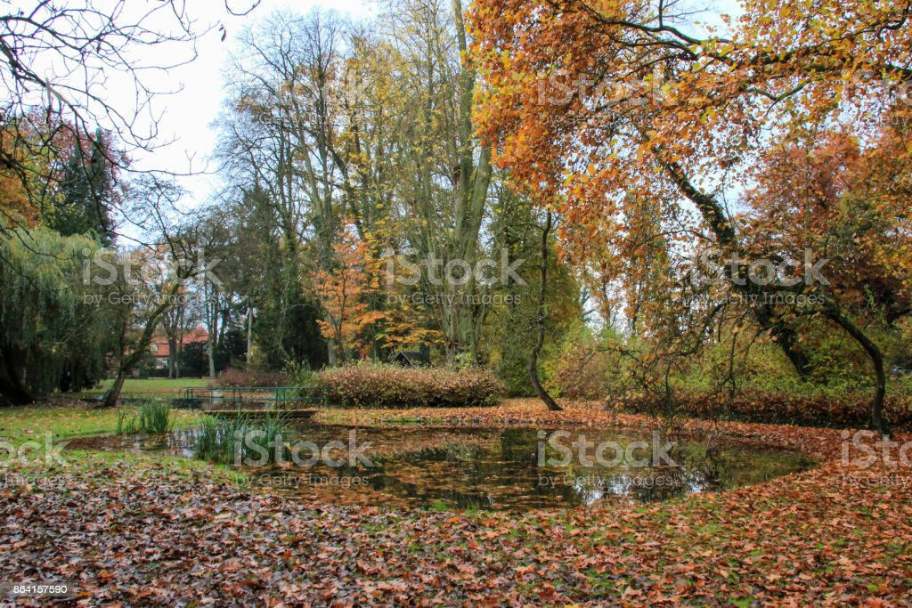 colorful leaves of an autumn landscape at the lake royalty-free stock photo