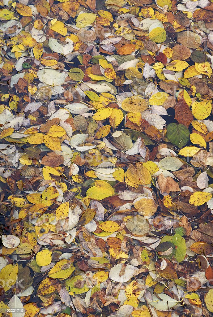Colorful leaves of different trees floating in water in fall royalty-free stock photo