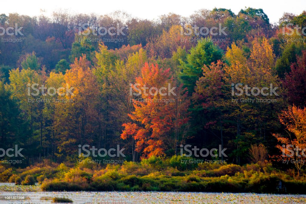 Colorful leaves on a lake at sunrise stock photo
