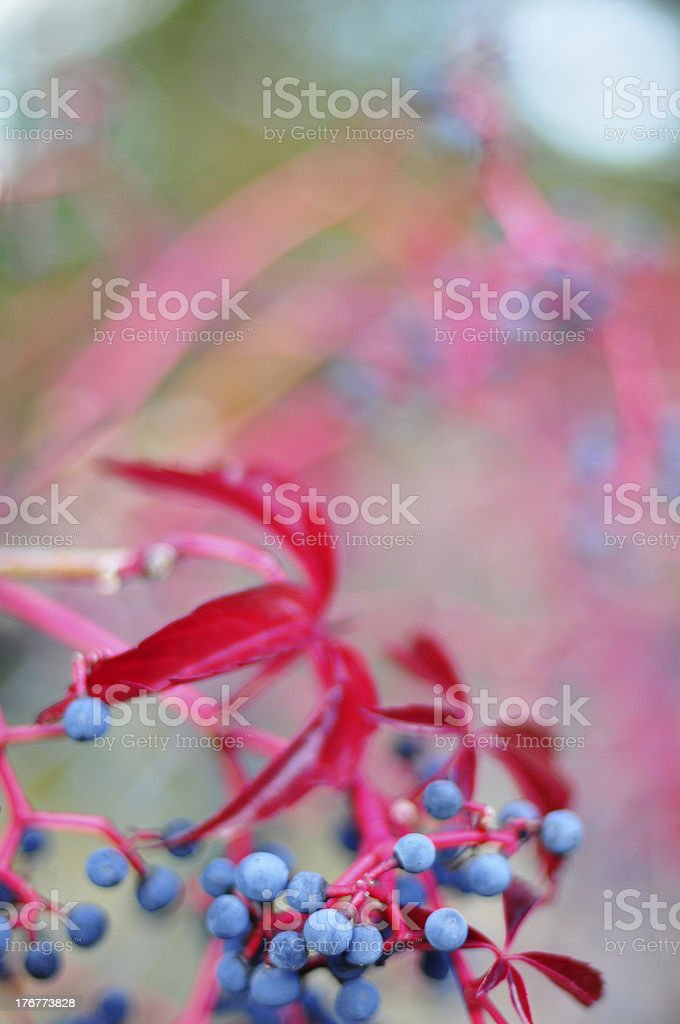 Colorful leaves on a sunny autumn day royalty-free stock photo