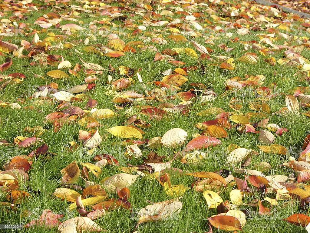 Colorful leaves on the ground royalty-free stock photo