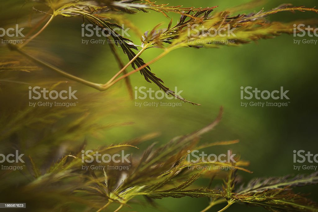 Colorful leaves royalty-free stock photo