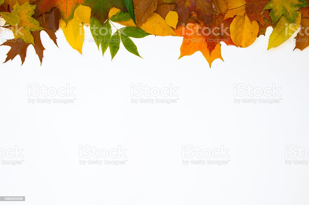 colorful leaves top royalty-free stock photo