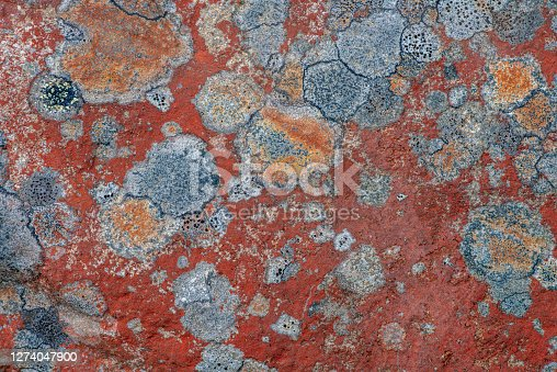 Detailed close up of colorful lichen or moss growing on a rock, creating a beautiful abstract pattern