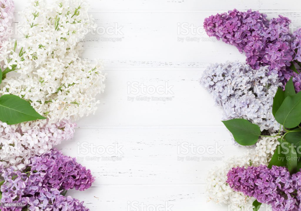 Colorful lilac flowers royalty-free stock photo