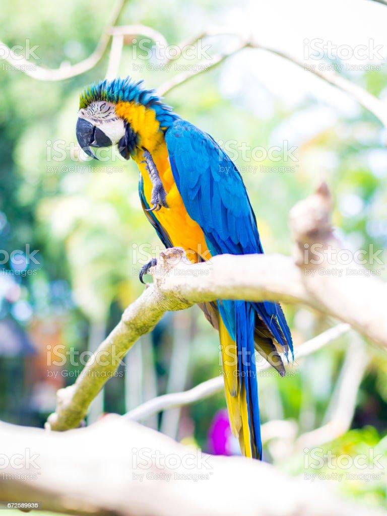 Pássaro arara colorida - foto de acervo