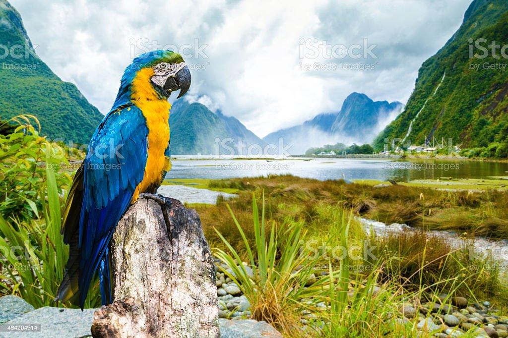Arara colorida trazem a beleza da natureza - foto de acervo