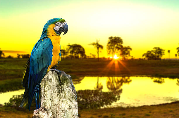 Colorful Macaw bringing beauty to Pantanal, Brazil Colorful Macaw bringing beauty to Pantanal, Brazil goias stock pictures, royalty-free photos & images