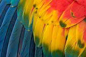 istock Colorful Macaw Plumage 611171128