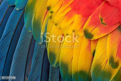 istock Colorful Macaw Plumage 611171128