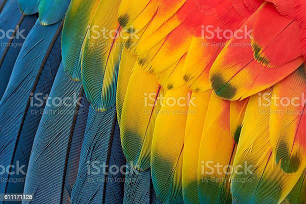 Colorful macaw plumage picture id611171128?b=1&k=6&m=611171128&s=612x612&h=piyr0bvgspxgikiayxbignrk5kyi5 riqicbfyxfn5y=